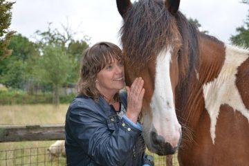 Workshops met paarden Maastricht Limburg | www.discover-coaching.nl