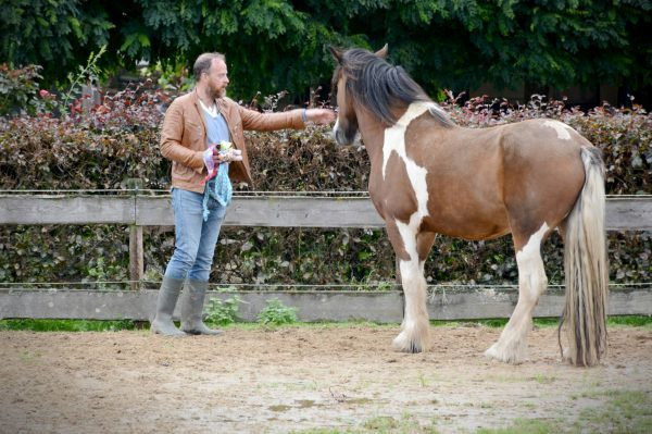 Paardencoach Maastricht-Limburg-Individuele Coaching |www.discover-coaching.nl