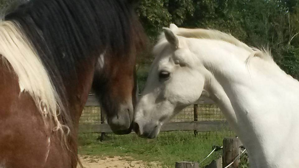 Paardencoaching Maastricht Limburg |www.discover-coaching.nl