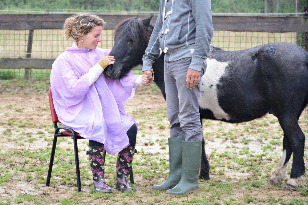 familieopstellingen met paarden - discover coaching Maastricht