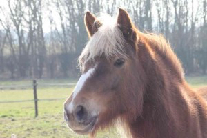Fleur, paardencoaching Maastricht Limburg |www.discover-coaching.nl
