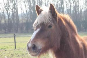 Fleur, paardencoaching Maastricht Limburg |www.discover-coaching.nl