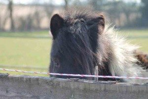 Robbie, paardencoaching Maastricht Limburg |www.discover-coaching.nl
