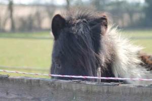 Robbie, paardencoaching Maastricht Limburg  www.discover-coaching.nl
