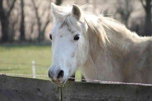 Spetter, paardencoaching Maastricht Limburg |www.discover-coaching.nl