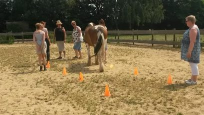 teambuilding-teamcoaching-maastricht-limburg-paardencoaching | www.discover-coaching.nl