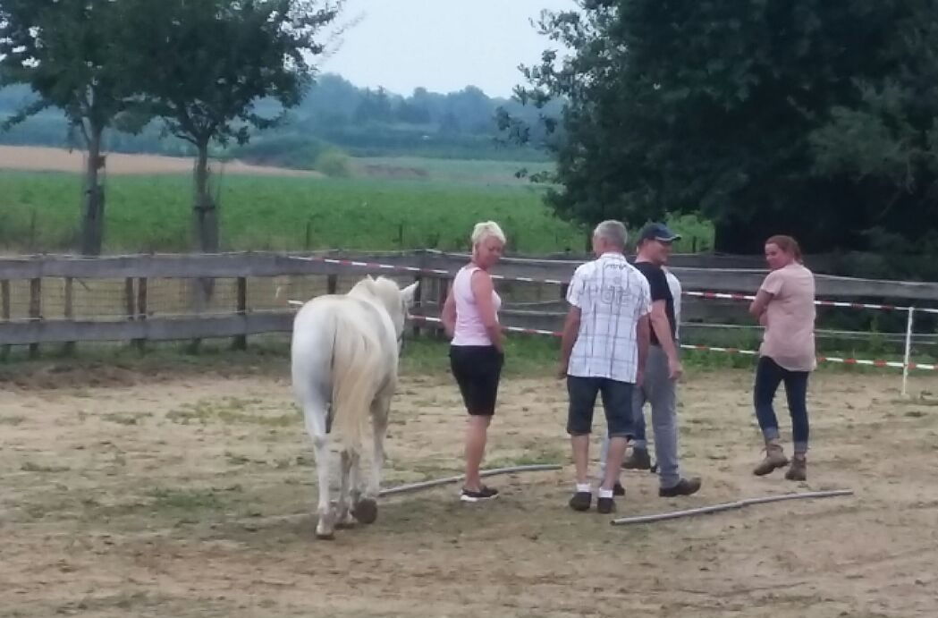 teamcoaching-paardencoach-teambuilding-maastricht |www.discover-coaching.nl
