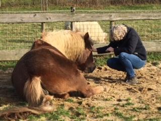 workshop met paarden - Maastricht - Discover-coaching