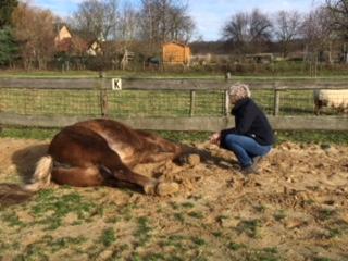 workshop met paarden - Discover Coaching Maastricht
